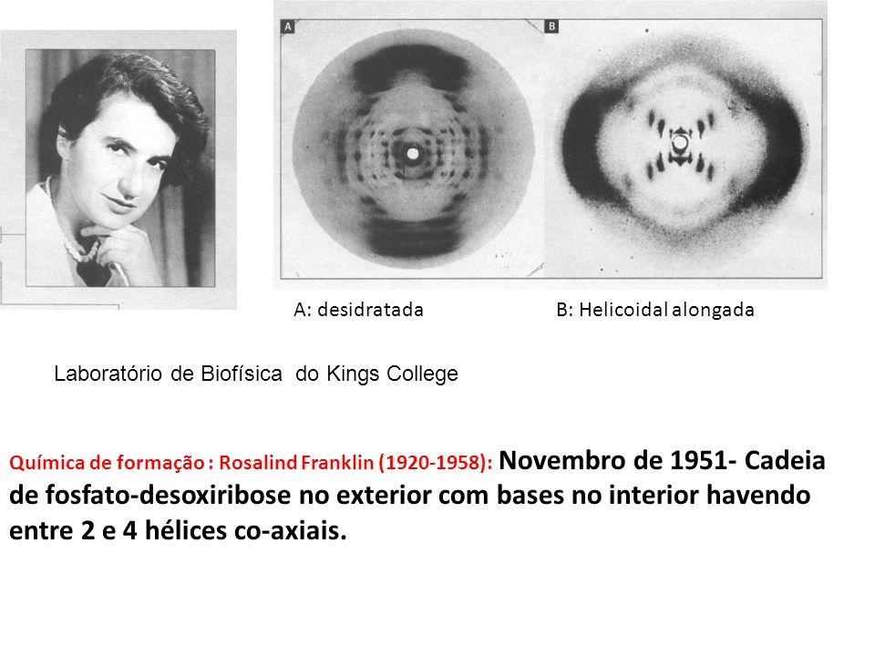 A: desidratada B: Helicoidal alongada. Laboratório de Biofísica do Kings College.