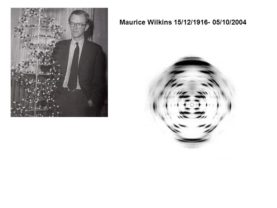 Maurice Wilkins 15/12/1916- 05/10/2004