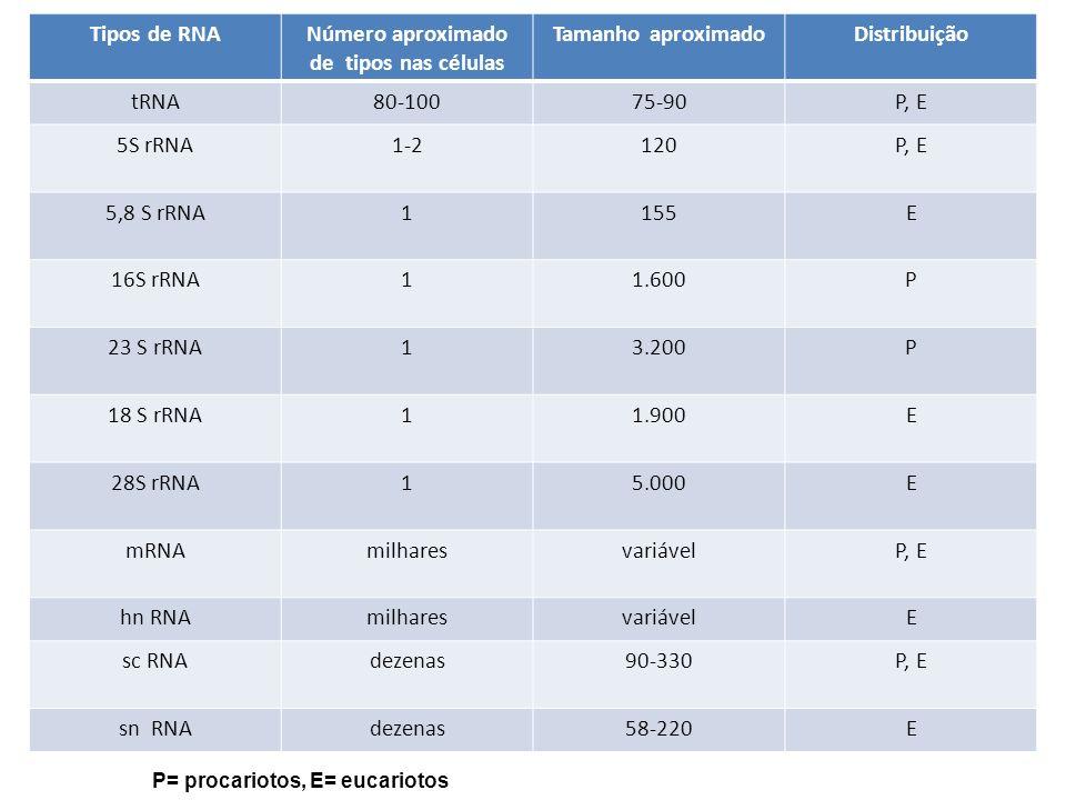 Número aproximado de tipos nas células