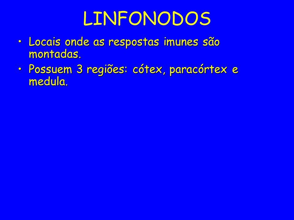 LINFONODOS Locais onde as respostas imunes são montadas.