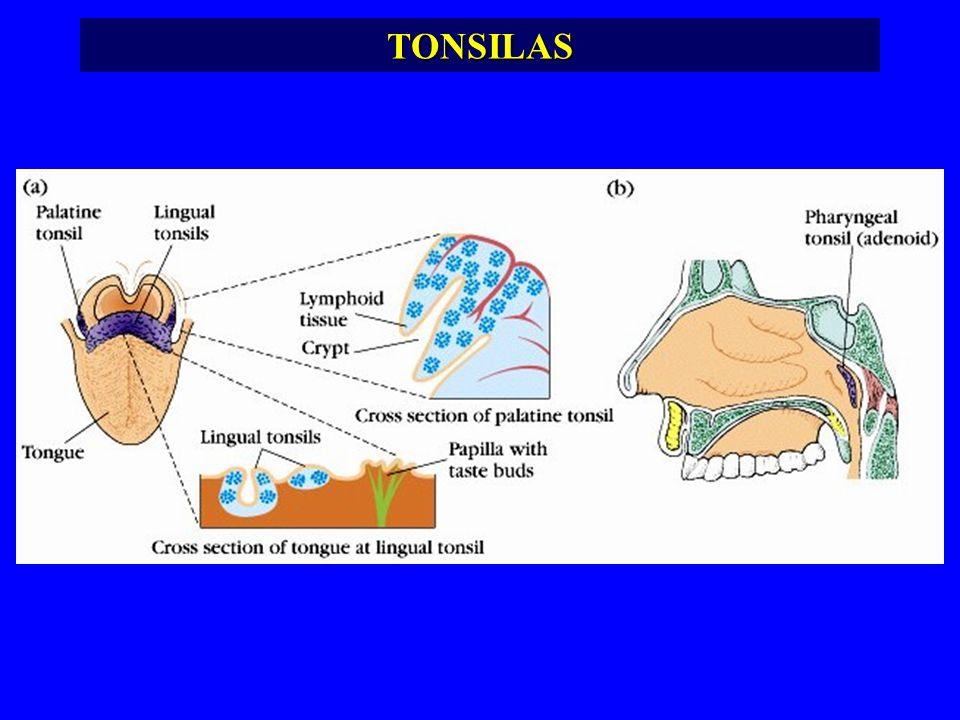 TONSILAS