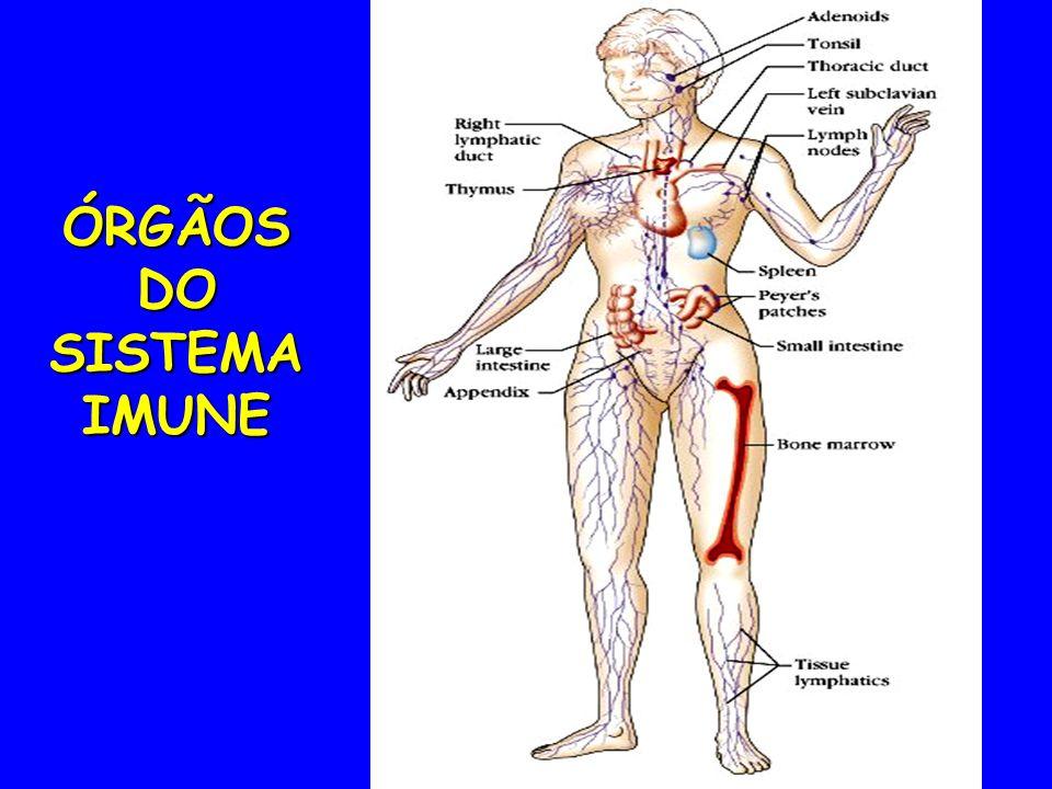 ÓRGÃOS DO SISTEMA IMUNE