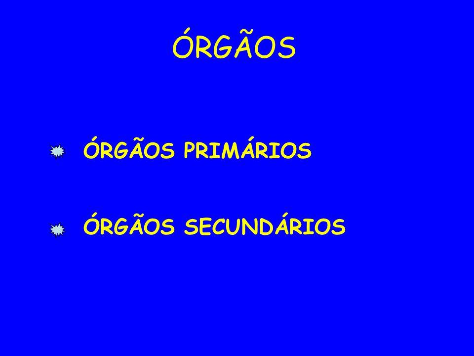 ÓRGÃOS ÓRGÃOS PRIMÁRIOS ÓRGÃOS SECUNDÁRIOS