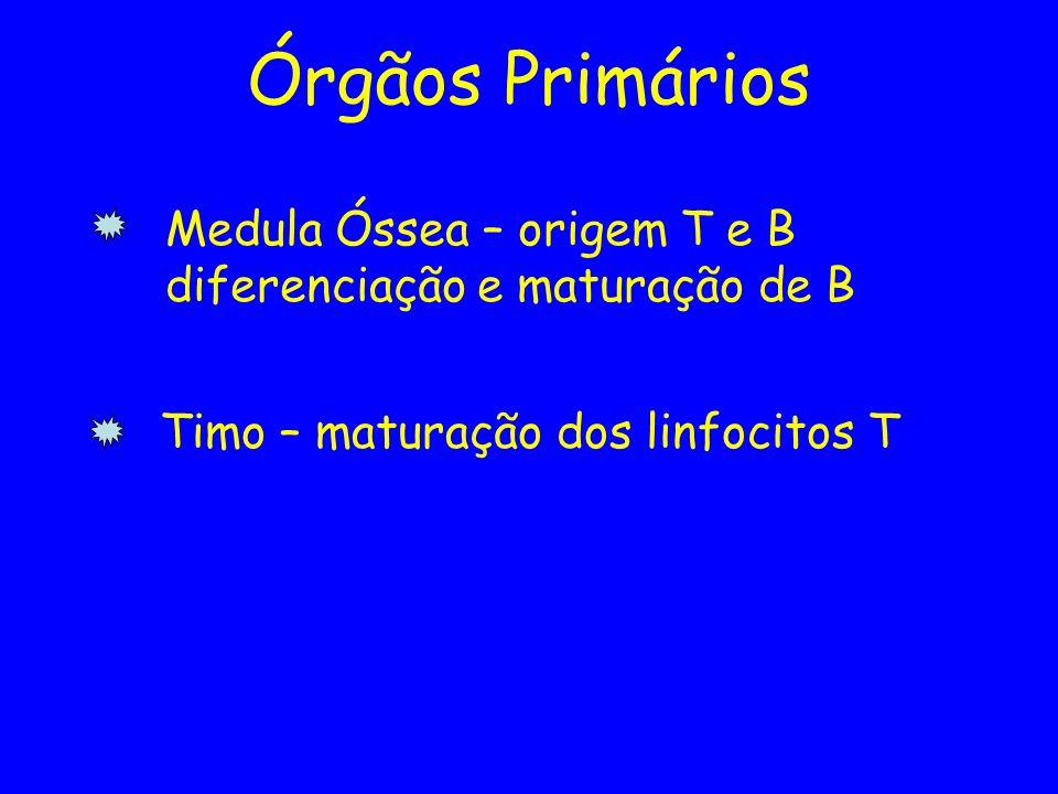 Medula Óssea – origem T e B diferenciação e maturação de B