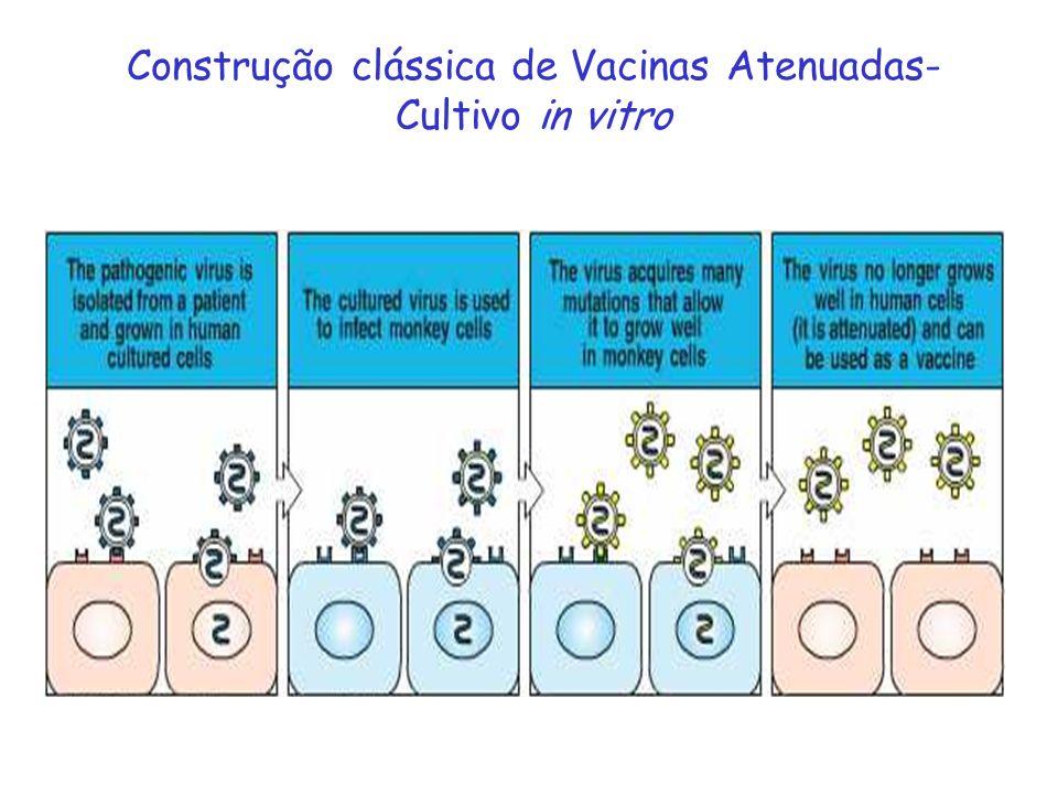 Construção clássica de Vacinas Atenuadas- Cultivo in vitro