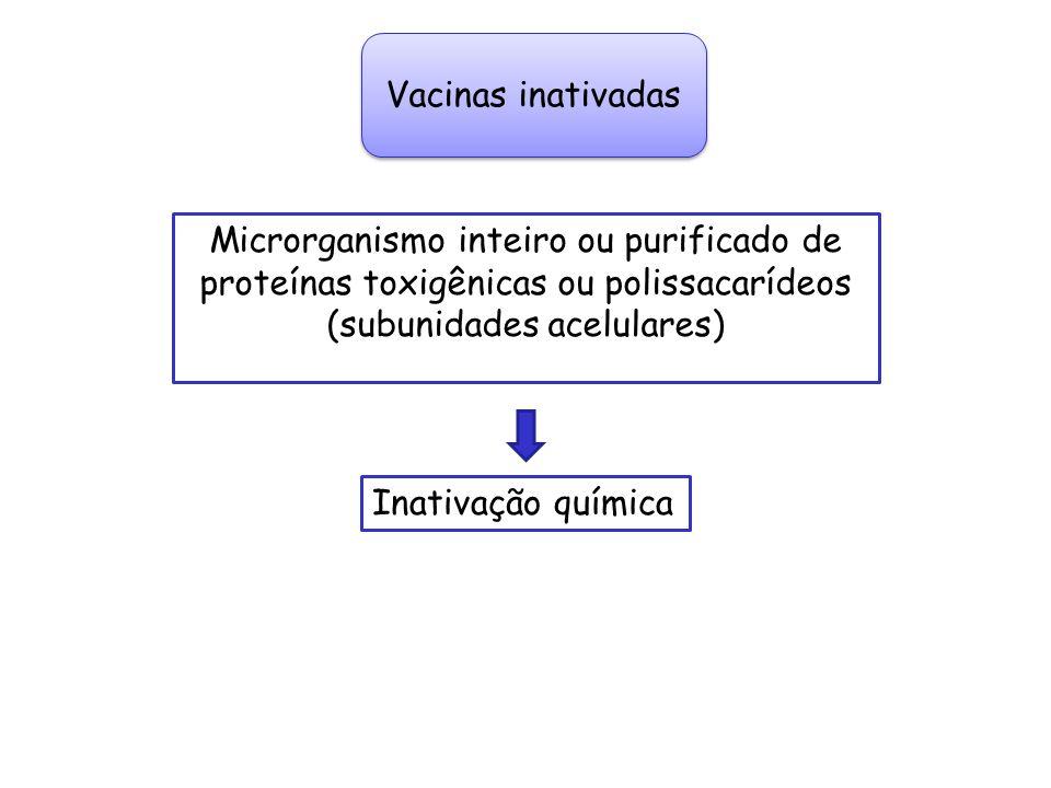 Vacinas inativadas Microrganismo inteiro ou purificado de proteínas toxigênicas ou polissacarídeos (subunidades acelulares)
