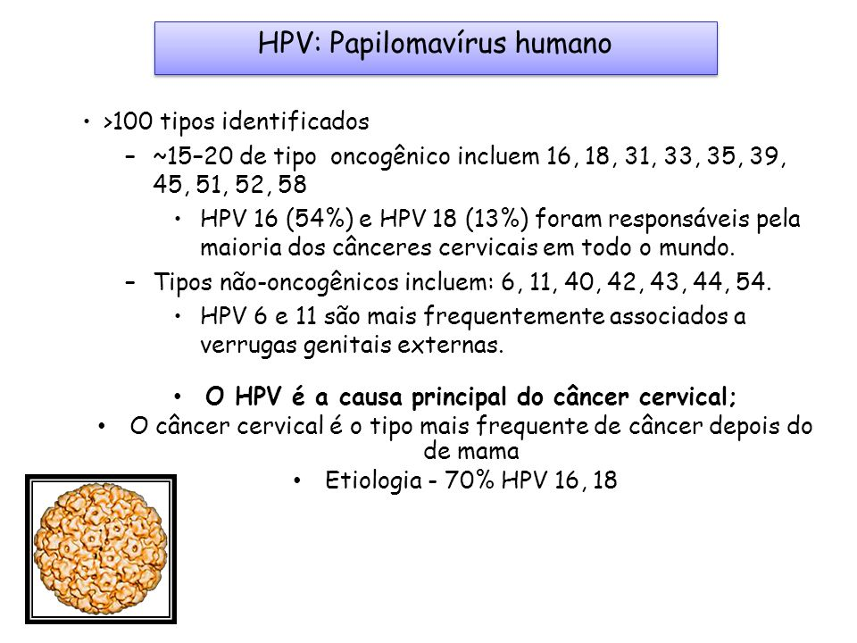 O HPV é a causa principal do câncer cervical;