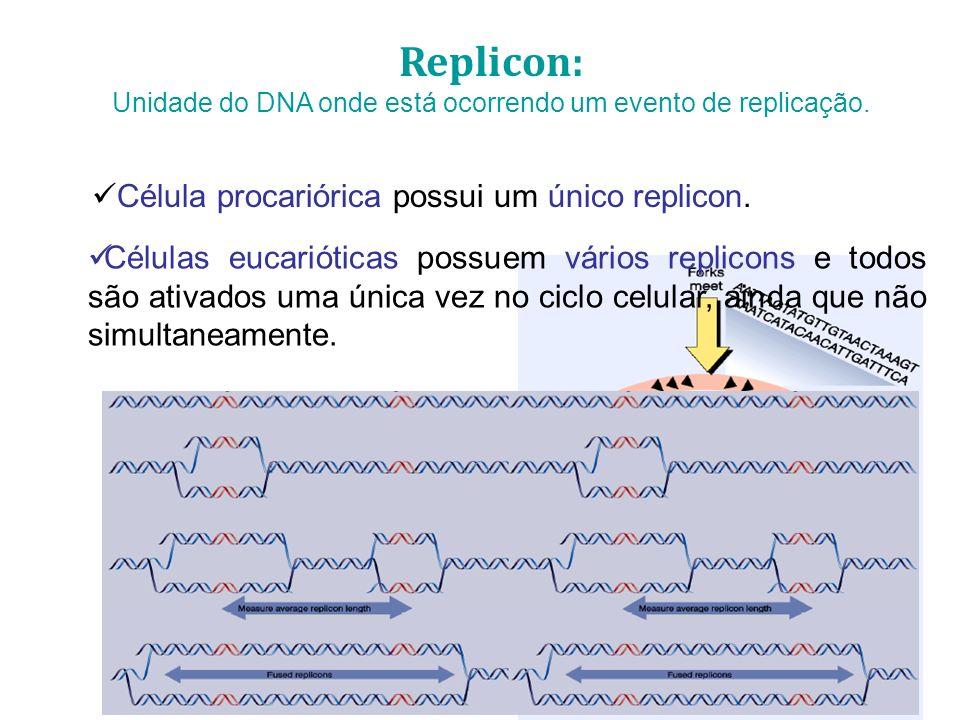 Unidade do DNA onde está ocorrendo um evento de replicação.