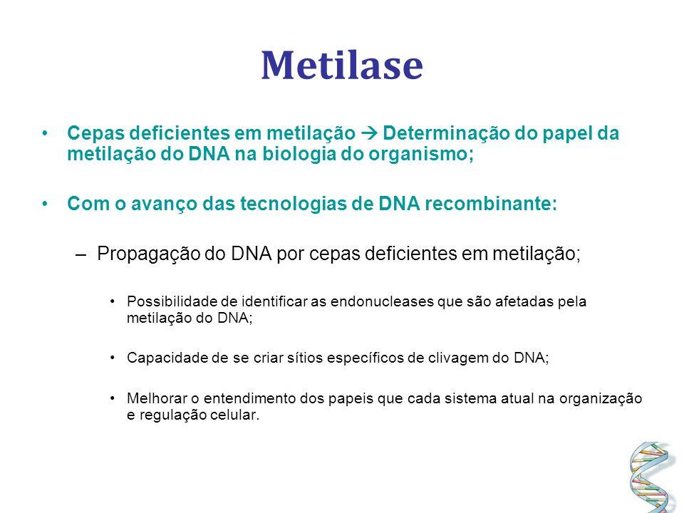 Metilase Cepas deficientes em metilação  Determinação do papel da metilação do DNA na biologia do organismo;