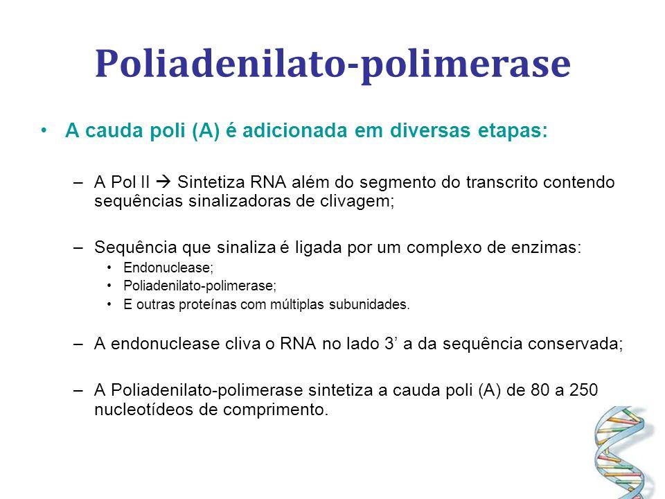 Poliadenilato-polimerase