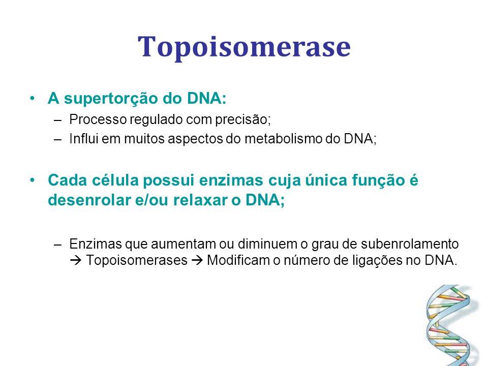 Topoisomerase A supertorção do DNA: