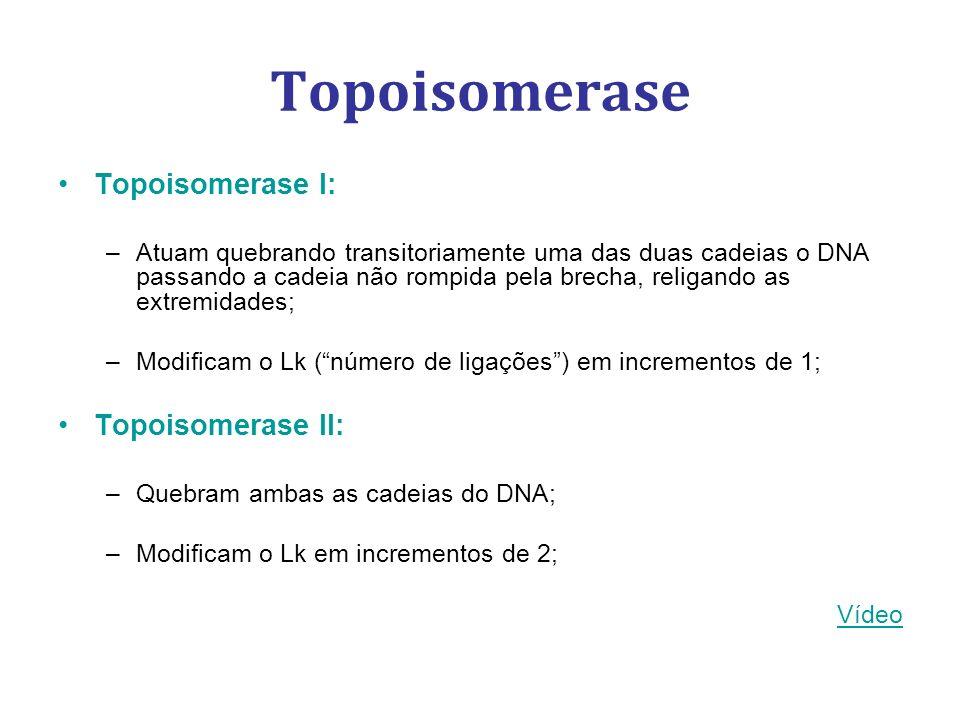 Topoisomerase Topoisomerase I: Topoisomerase II: