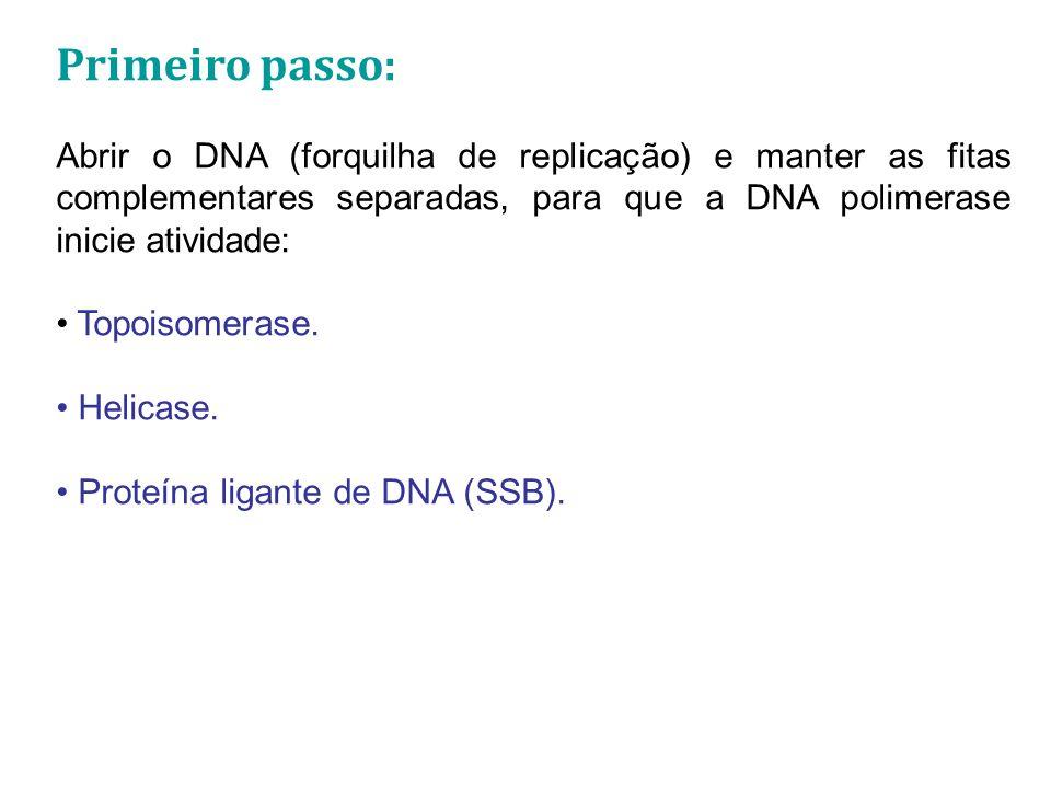 Primeiro passo: Abrir o DNA (forquilha de replicação) e manter as fitas complementares separadas, para que a DNA polimerase inicie atividade: