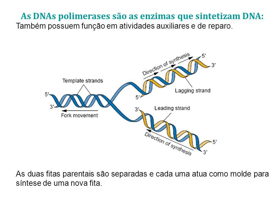 As DNAs polimerases são as enzimas que sintetizam DNA: