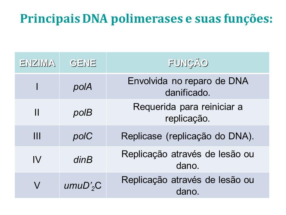Principais DNA polimerases e suas funções: