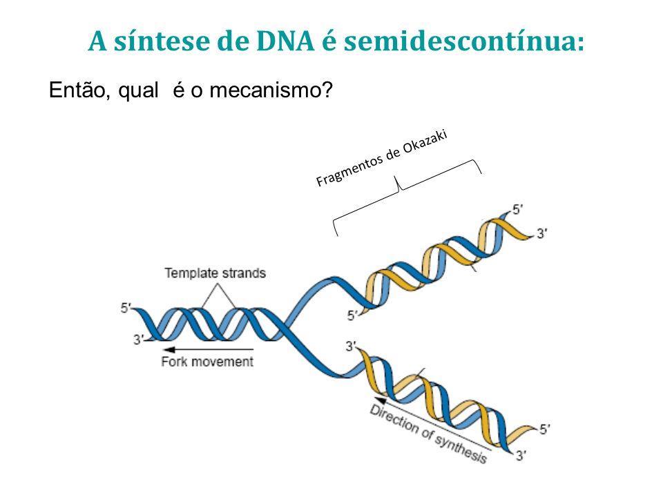 A síntese de DNA é semidescontínua: