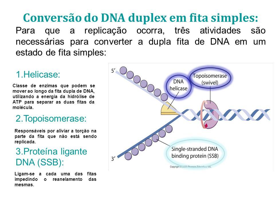 Conversão do DNA duplex em fita simples: