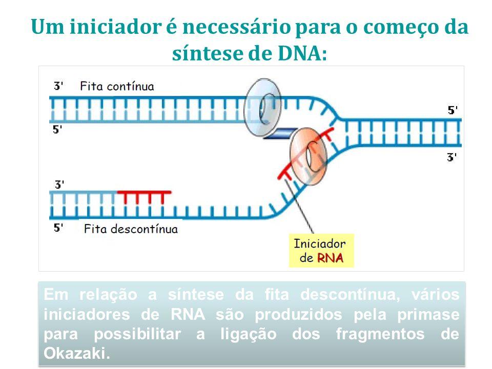 Um iniciador é necessário para o começo da síntese de DNA: