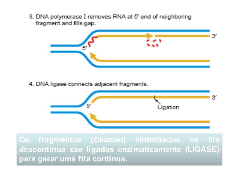 Os fragmentos (Okazaki) sintetizados na fita descontínua são ligados enzimaticamente (LIGASE) para gerar uma fita contínua.