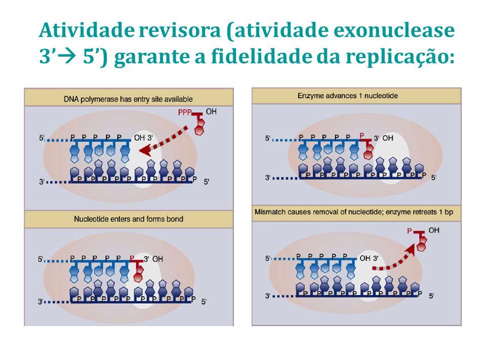 Atividade revisora (atividade exonuclease