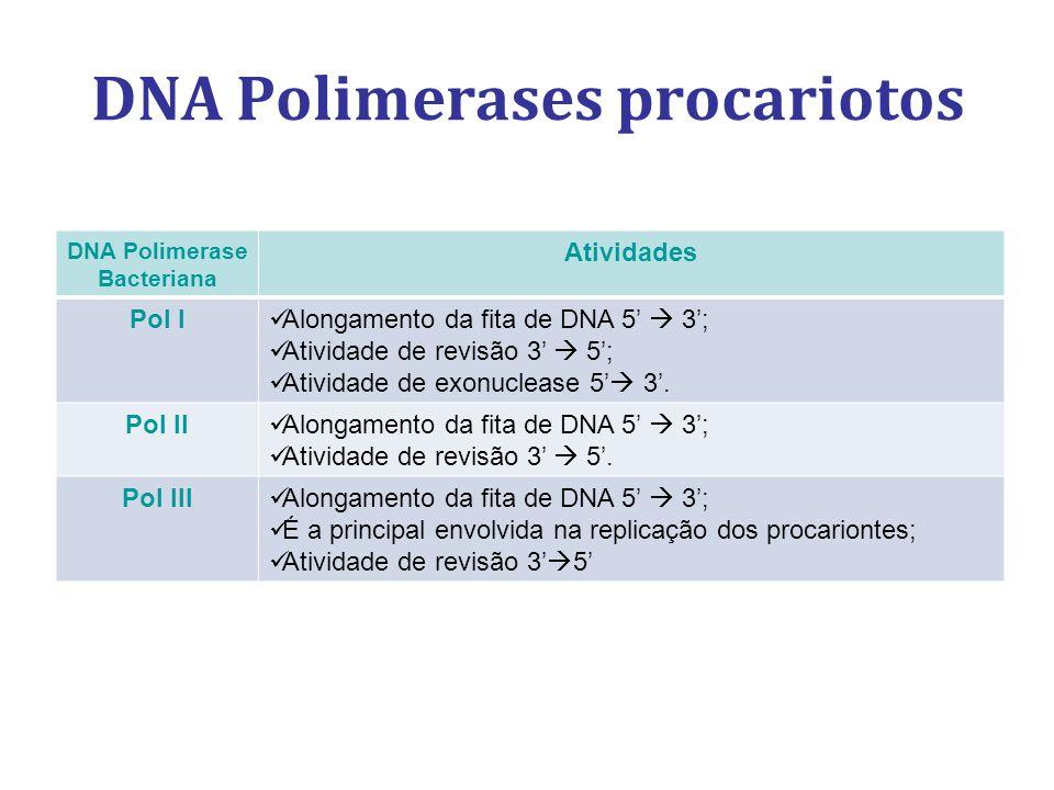 DNA Polimerases procariotos