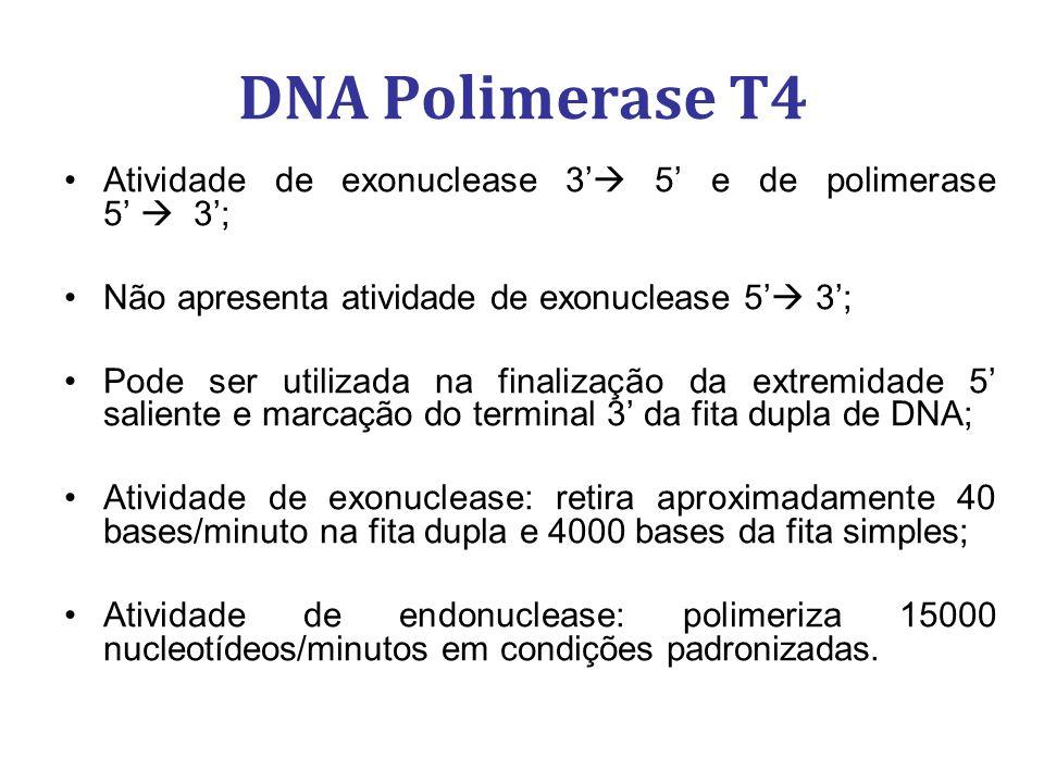 DNA Polimerase T4 Atividade de exonuclease 3' 5' e de polimerase 5'  3'; Não apresenta atividade de exonuclease 5' 3';