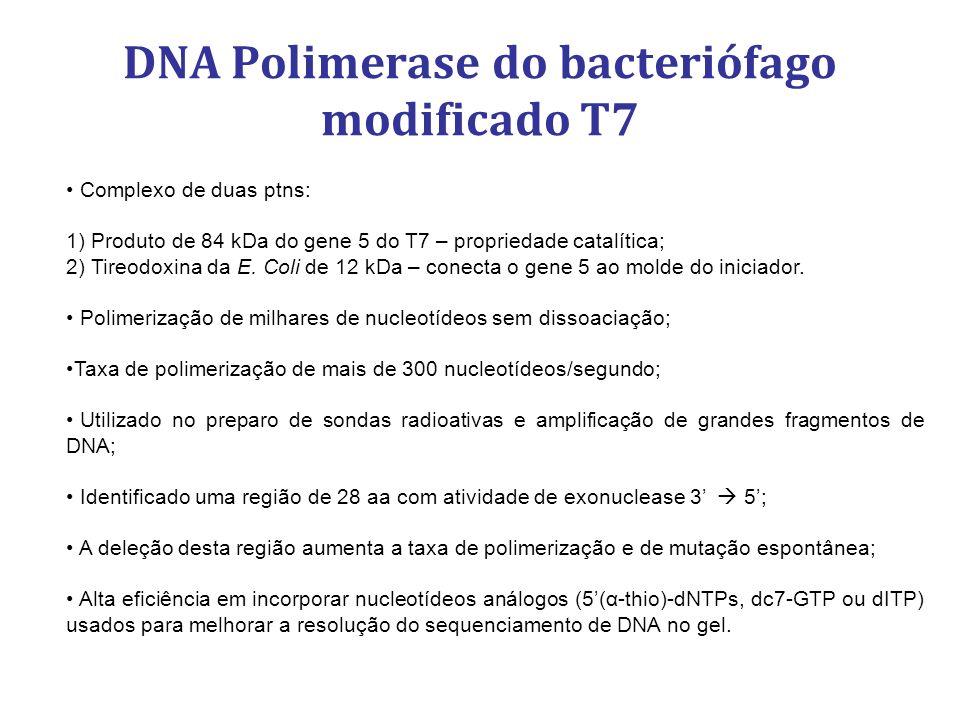 DNA Polimerase do bacteriófago modificado T7