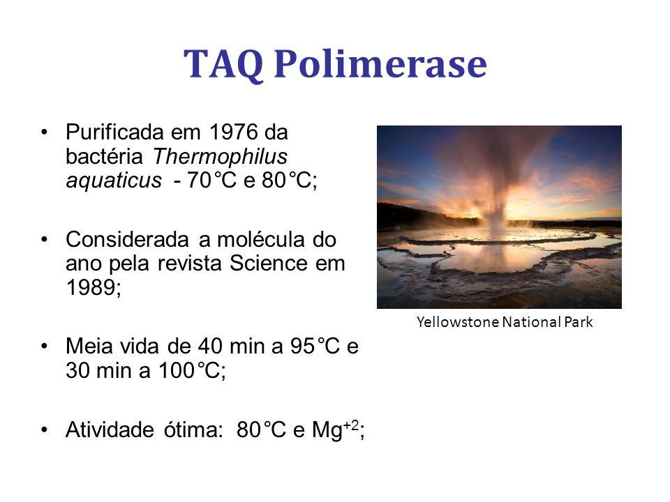 TAQ Polimerase Purificada em 1976 da bactéria Thermophilus aquaticus - 70°C e 80°C; Considerada a molécula do ano pela revista Science em 1989;