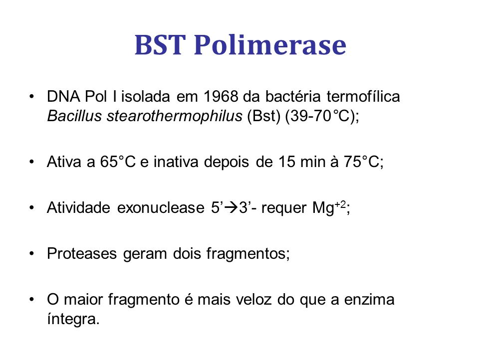 BST Polimerase DNA Pol I isolada em 1968 da bactéria termofílica Bacillus stearothermophilus (Bst) (39-70°C);