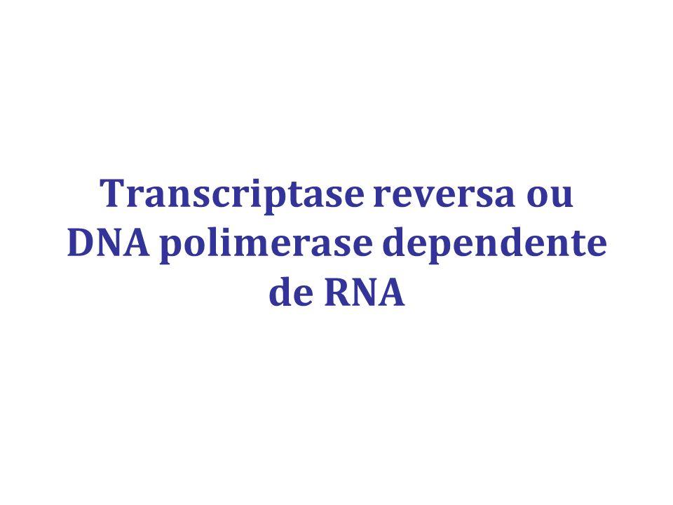 Transcriptase reversa ou DNA polimerase dependente de RNA