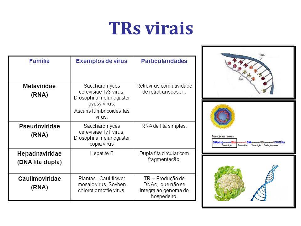 TRs virais Família Exemplos de vírus Particularidades Metaviridae