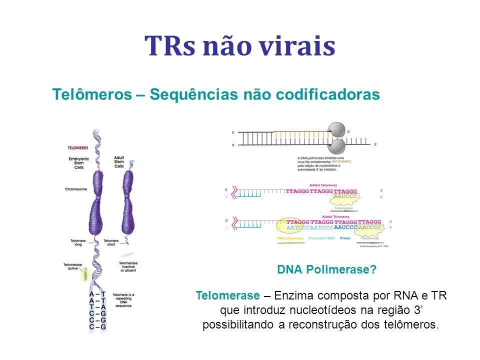 TRs não virais Telômeros – Sequências não codificadoras