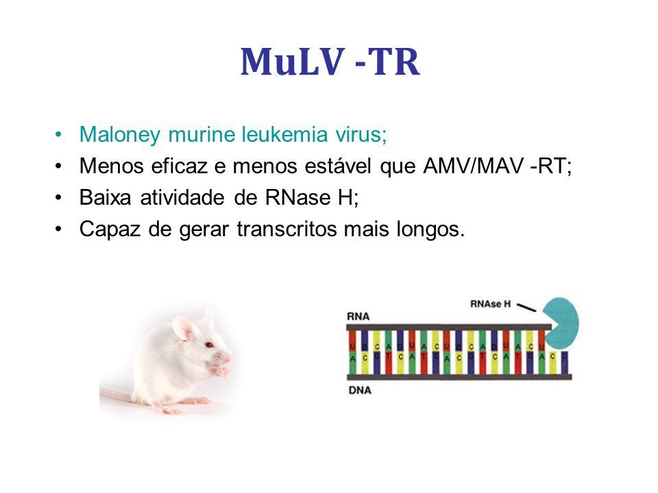 MuLV -TR Maloney murine leukemia virus;