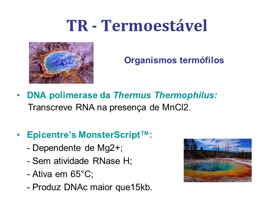TR - Termoestável DNA polimerase da Thermus Thermophilus: