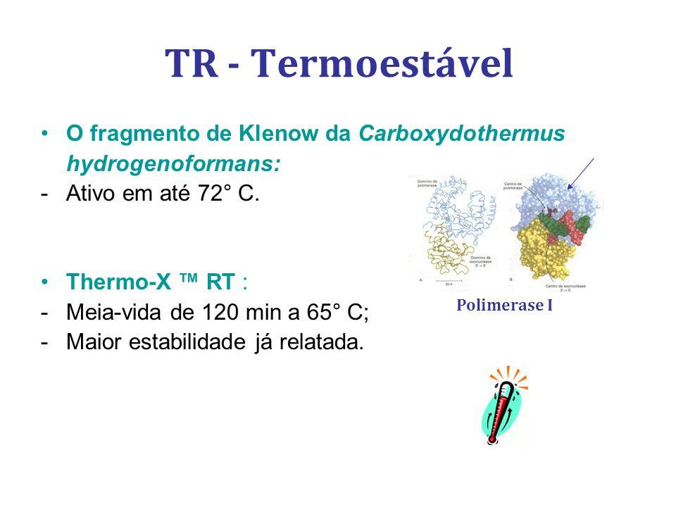 TR - Termoestável O fragmento de Klenow da Carboxydothermus