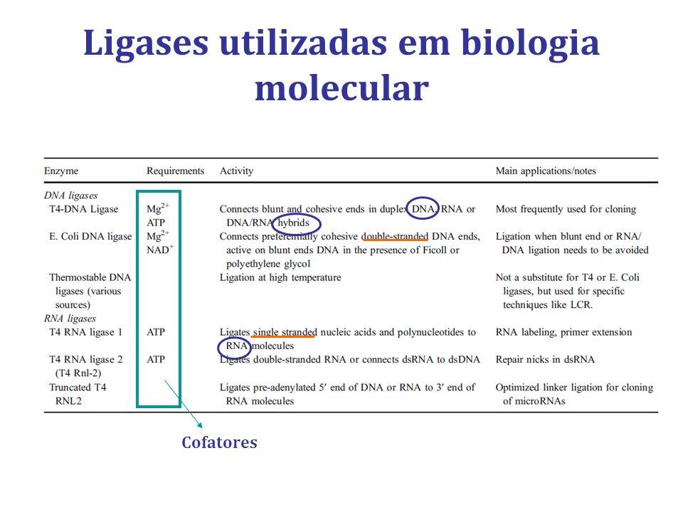 Ligases utilizadas em biologia molecular