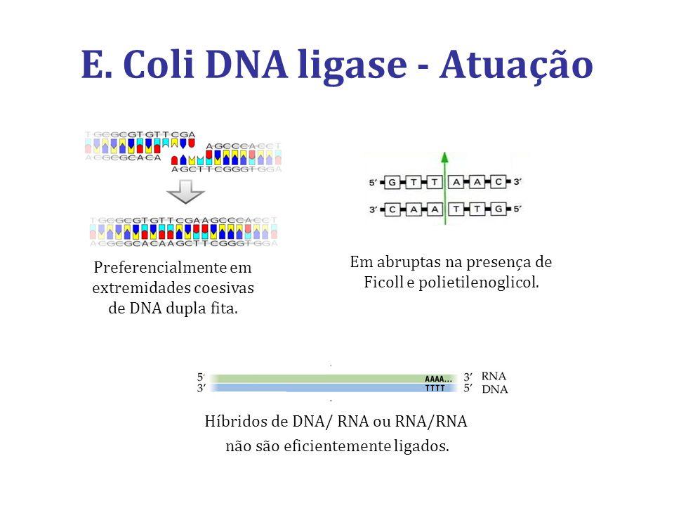 E. Coli DNA ligase - Atuação