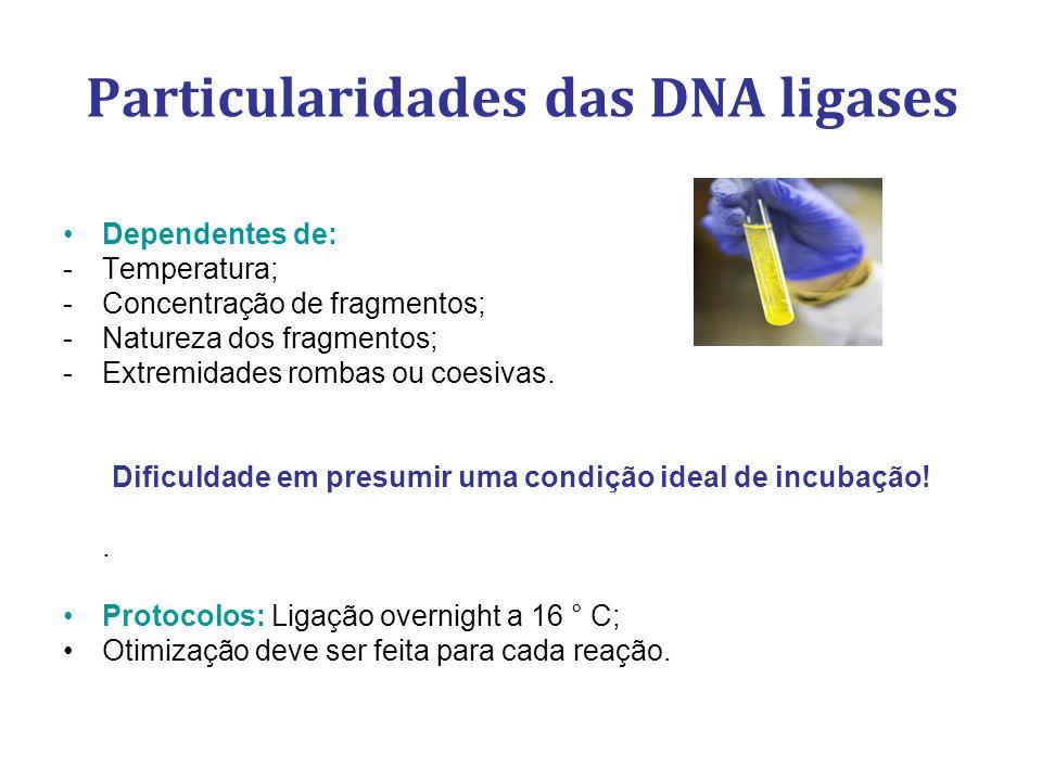 Particularidades das DNA ligases