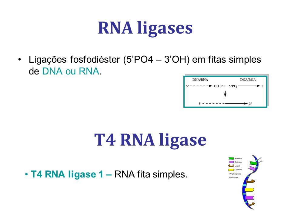 RNA ligases T4 RNA ligase