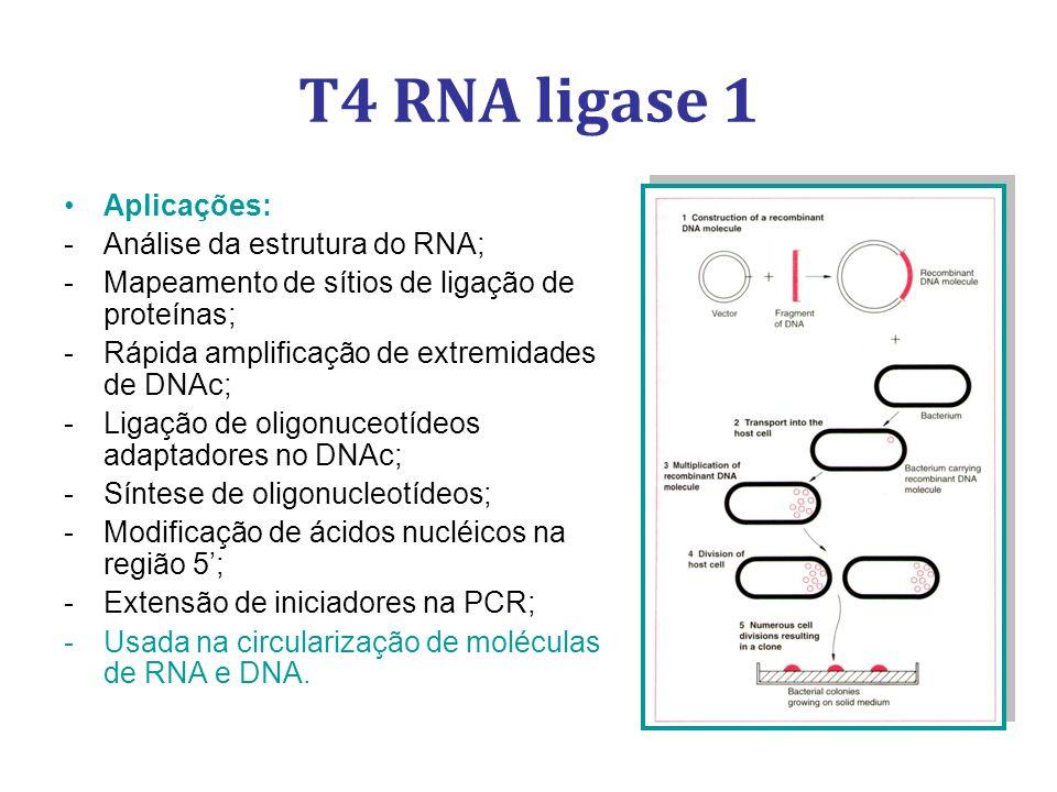 T4 RNA ligase 1 Aplicações: Análise da estrutura do RNA;