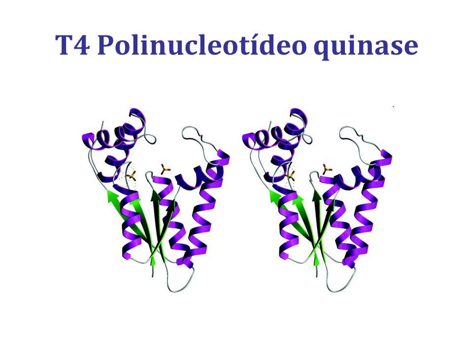T4 Polinucleotídeo quinase