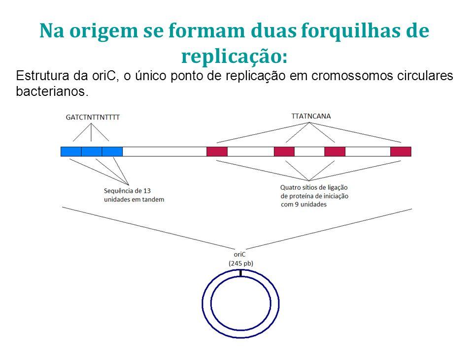 Na origem se formam duas forquilhas de replicação: