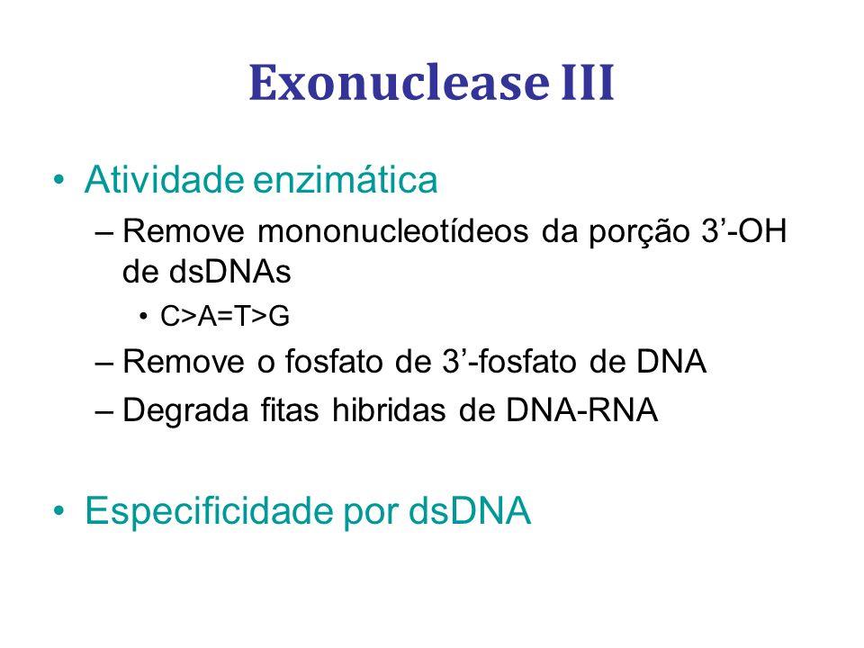 Exonuclease III Atividade enzimática Especificidade por dsDNA