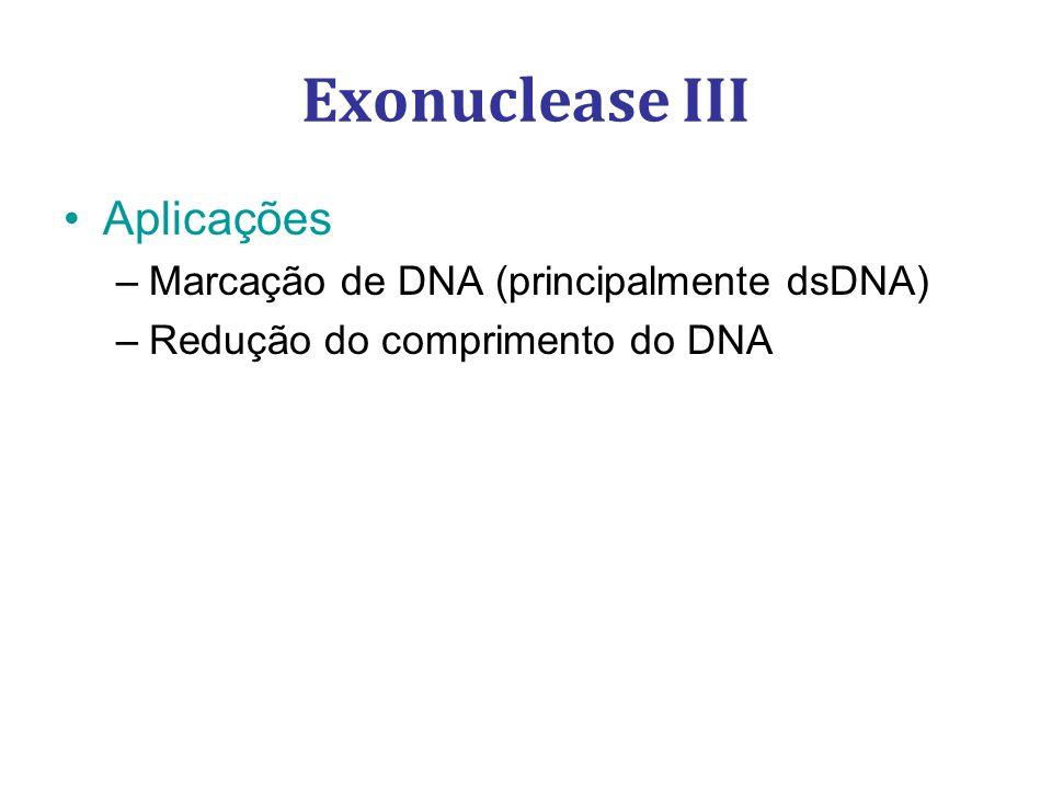 Exonuclease III Aplicações Marcação de DNA (principalmente dsDNA)