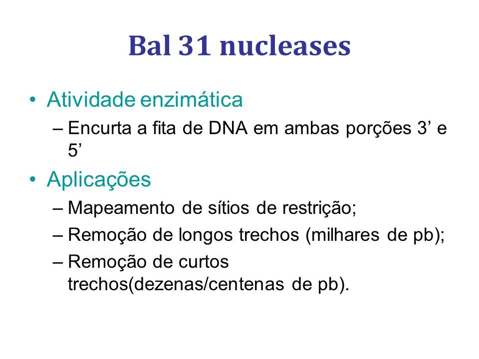 Bal 31 nucleases Atividade enzimática Aplicações