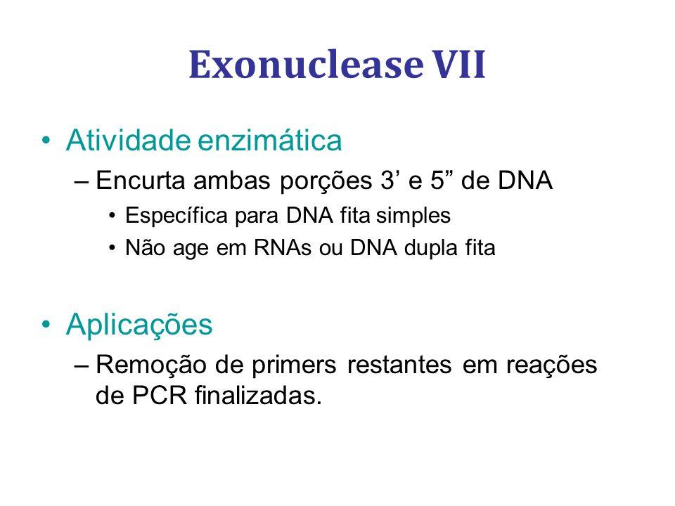 Exonuclease VII Atividade enzimática Aplicações