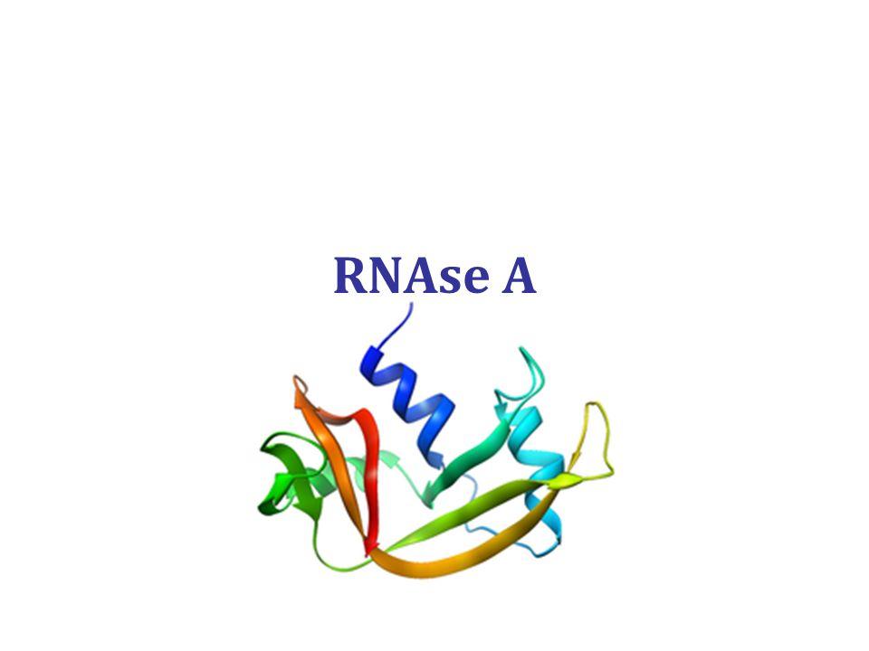 RNAse A