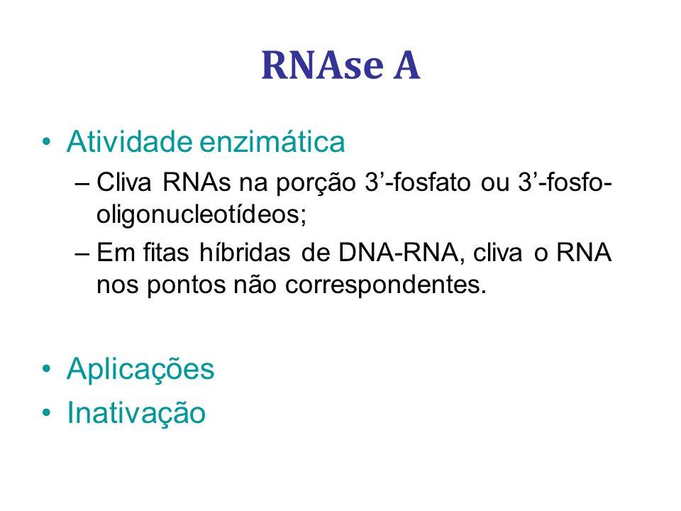 RNAse A Atividade enzimática Aplicações Inativação