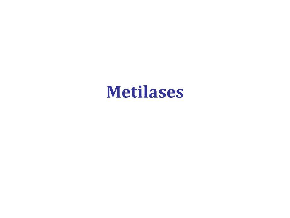 Metilases