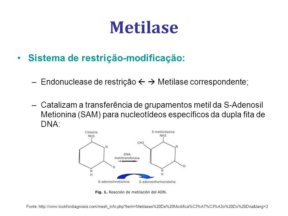 Metilase Sistema de restrição-modificação: